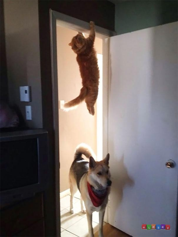 Подборка веселых картинок с собаками