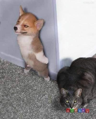 Смешные и веселые фото с собаками