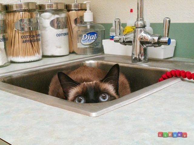 Кошки VS Ветеринары