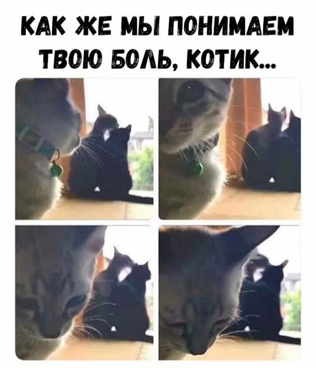 Мемы, интересные фото и картинки для настроения