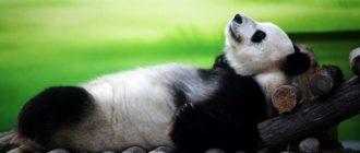 video animals 2 330x140 - Веселая подборка с животными #1
