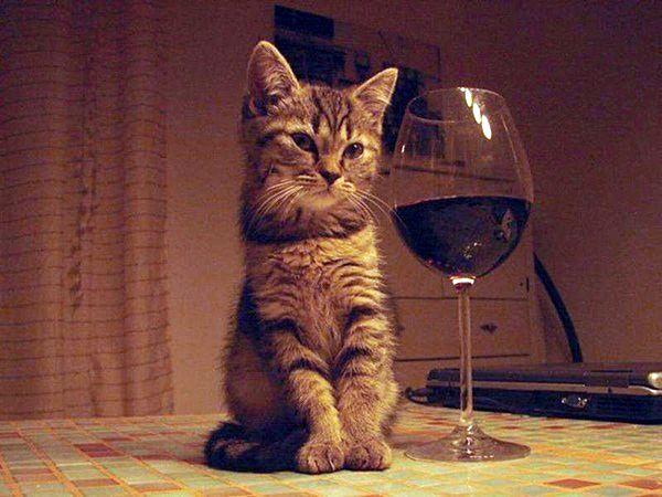 Алко-коты на котовторник