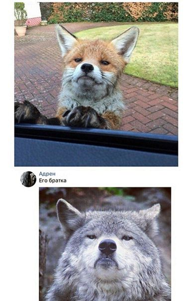 Смешные картинки, мемы и комментарии на пятницу