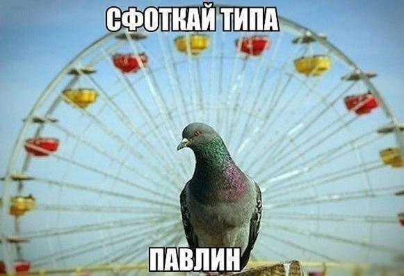 Зона смеха #4 - соцсети, мемы и картинки с надписями - 100 фото