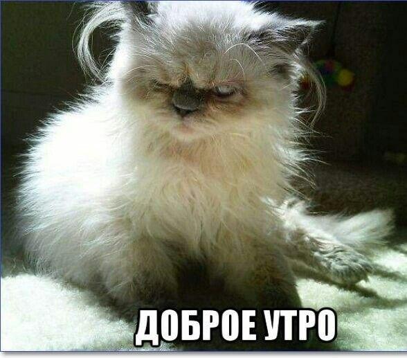 70 смешных картинок для настроения на понедельник