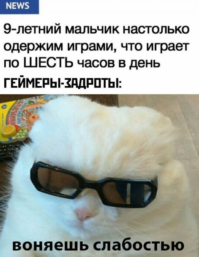 Соцсети, мемы и картинки с надписями