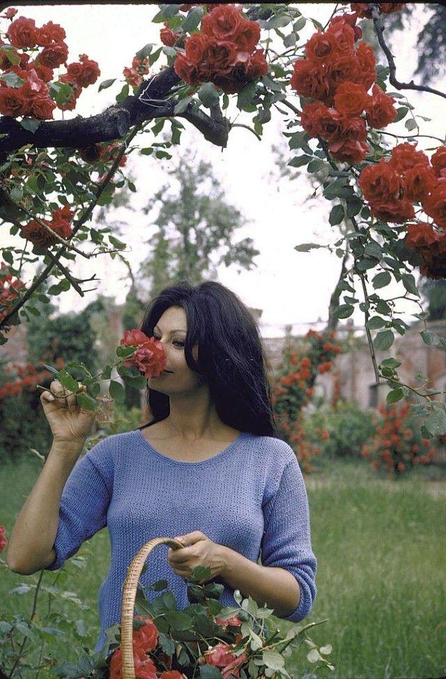 Софи Лорен в самом расцвете - интересная подборка